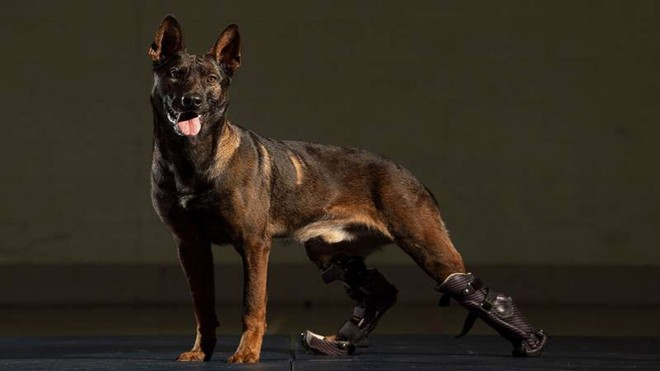 Chú chó khuyết tật chiến đấu chống khủng bố được quân đội Anh trao tặng huân chương cao quý ảnh 4