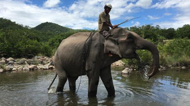 [Tin nhanh tối 4-12-2020] Con voi cuối cùng ở Bắc Tây Nguyên chết bên bờ suối ảnh 1