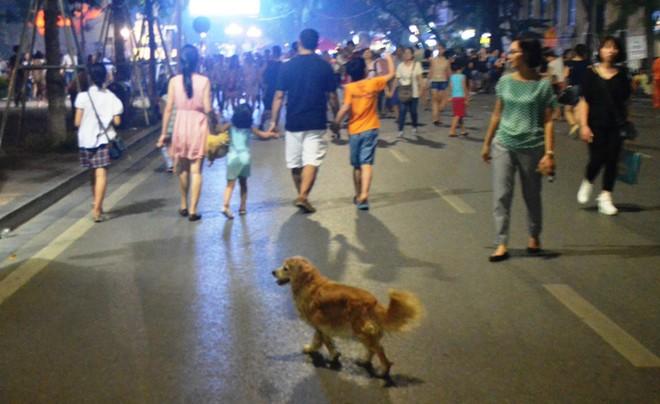 Hà Nội: Ăn mặc lịch sự, không nói tục, không dắt, thả vật nuôi ở phố đi bộ hồ Hoàn Kiếm ảnh 1