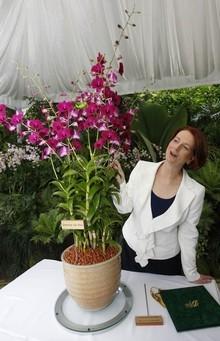 Loài hoa lan mới của Singapore mang tên Thủ tướng Australia
