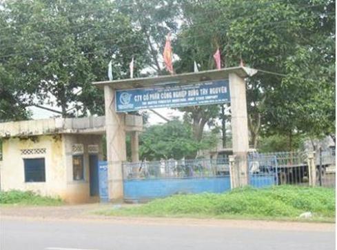 Khởi tố nguyên Tổng Giám đốc TCty lâm nghiệp Việt Nam ảnh 1