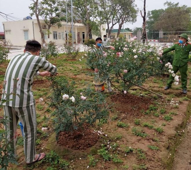Gần 500 cây xanh được trồng trong khuôn viên Trại tạm giam số 2 ảnh 2