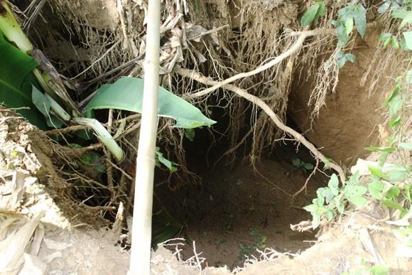 """""""Hố tử thần"""" sâu 10m xuất hiện trong vườn nhà ảnh 2"""
