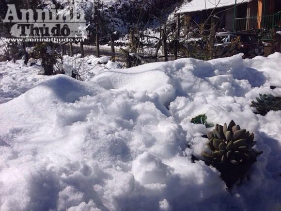 Nắng tuyết Sa Pa hút hồn du khách thập phương ảnh 1