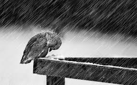 """Kiểu sống """"quái lạ"""" oán trách cả nắng mưa, gió rét ảnh 2"""