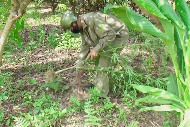 Hà Nội: Liên tiếp phát hiện các vụ trồng cần sa trong nhà, vườn ảnh 2
