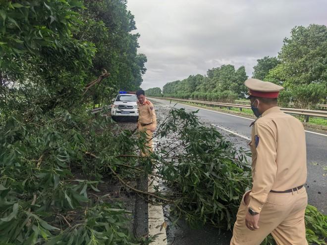 Xử lý cây đổ do mưa lớn, kịp thời đảm bảo an toàn trên cao tốc Pháp Vân – Cầu Giẽ ảnh 1