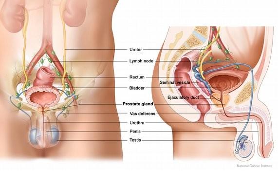 Tăng nguy cơ ung thư 17% ở nam giới bổ sung vitamin E