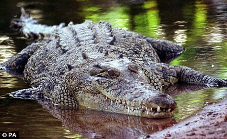Xót xa bé trai 12 tuổi bị cá sấu ngoạm khi đang bơi ảnh 1