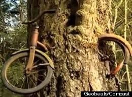 Kỳ lạ: Thân cây nuốt chửng xe đạp suốt 50 năm qua ảnh 1