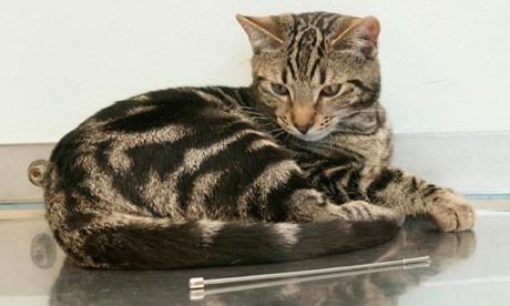 Chú mèo sống sót kỳ diệu sau khi ăn…ăng-ten ti-vi ảnh 1