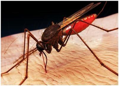 Xét nghiệm mới phát hiện sốt rét kháng thuốc ảnh 1