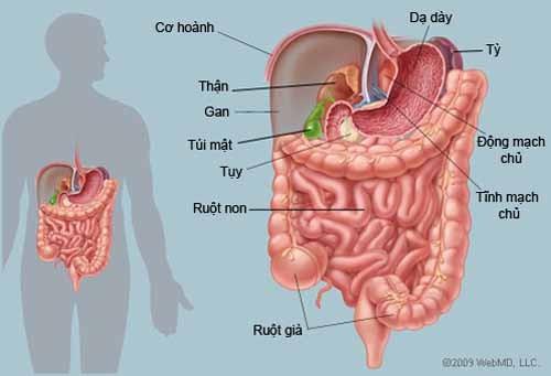 Những cách tăng cường sức khỏe đường ruột