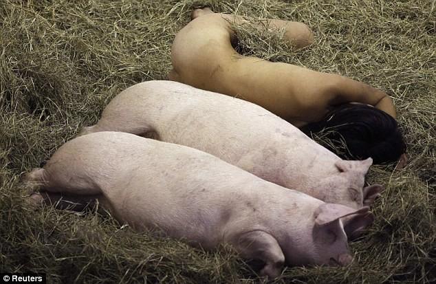 Nữ nghệ sĩ sống trần truồng với lợn trong 104 giờ ảnh 3