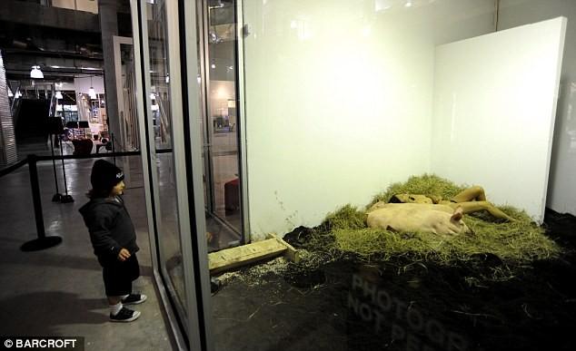 Nữ nghệ sĩ sống trần truồng với lợn trong 104 giờ ảnh 4