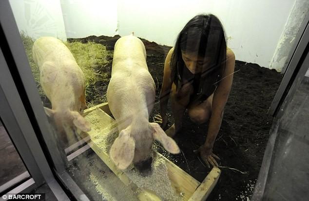 Nữ nghệ sĩ sống trần truồng với lợn trong 104 giờ ảnh 2