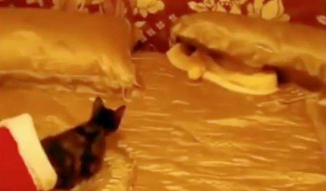 Kinh hoàng xem cảnh lấy mèo sống cho rắn ăn ảnh 2