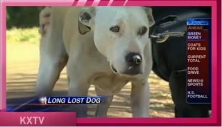 Chú chó mất tích 8 năm về với chủ ảnh 2