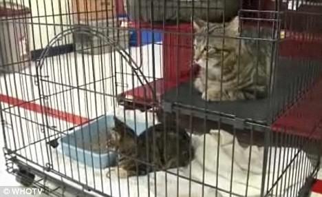 Thần kỳ chú chó cứu 2 con mèo bị vứt trên đường ảnh 4