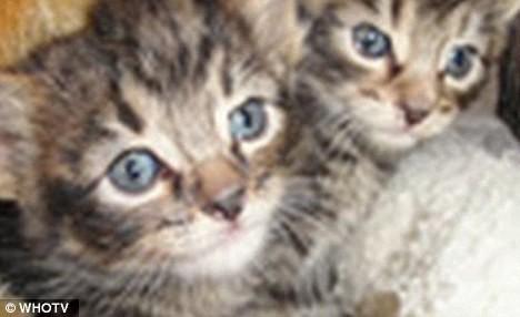 Thần kỳ chú chó cứu 2 con mèo bị vứt trên đường ảnh 3
