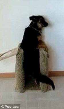 Kỳ lạ chú chó tự động đứng bằng hai chân khi ăn ảnh 1
