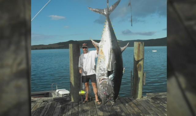 Câu được cá ngừ khổng lồ nặng 355 kg ảnh 1