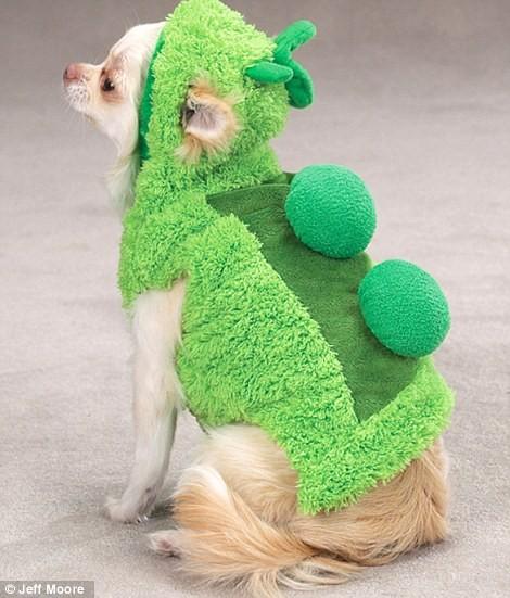 Ngắm những bộ váy đáng yêu dành cho cún cưng ảnh 1