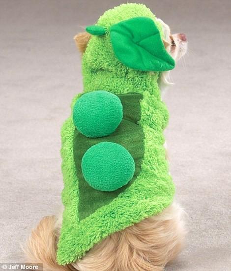 Ngắm những bộ váy đáng yêu dành cho cún cưng ảnh 2