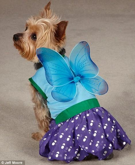 Ngắm những bộ váy đáng yêu dành cho cún cưng ảnh 3