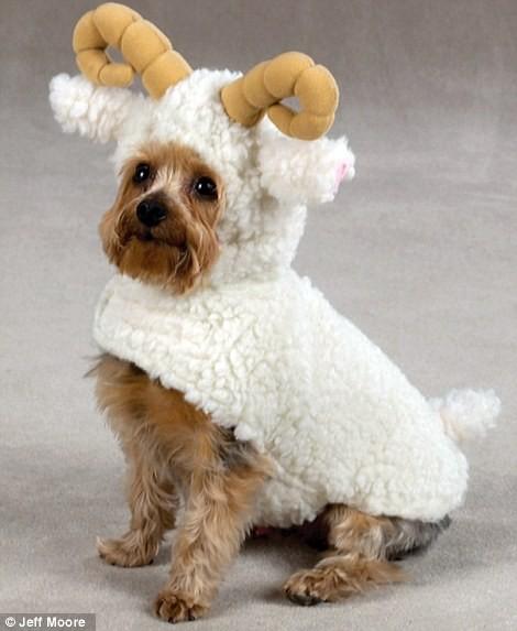 Ngắm những bộ váy đáng yêu dành cho cún cưng ảnh 4