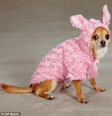 Ngắm những bộ váy đáng yêu dành cho cún cưng ảnh 11
