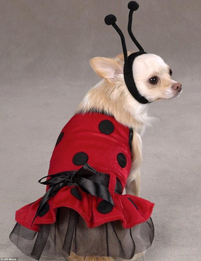Ngắm những bộ váy đáng yêu dành cho cún cưng ảnh 5