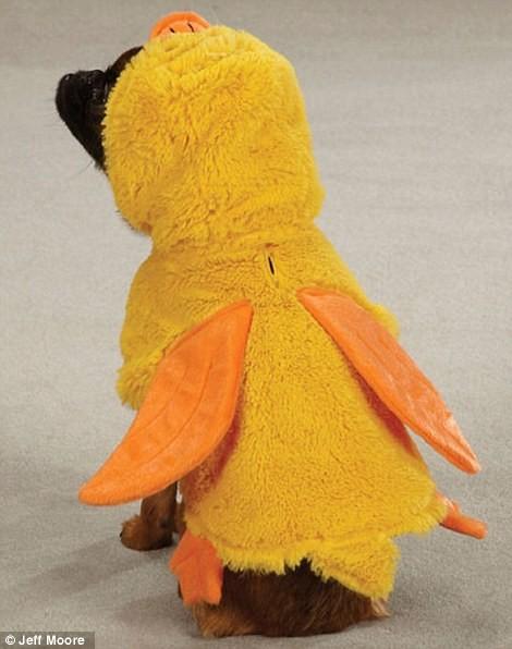 Ngắm những bộ váy đáng yêu dành cho cún cưng ảnh 9