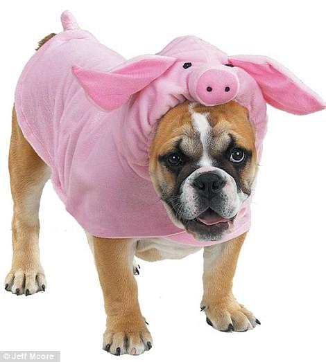 Ngắm những bộ váy đáng yêu dành cho cún cưng ảnh 6