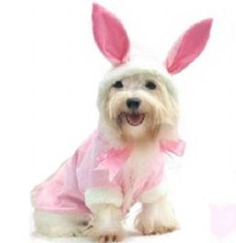 Ngắm những bộ váy đáng yêu dành cho cún cưng ảnh 7