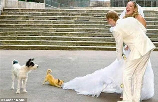 Những bức ảnh cưới oái oăm, dở khóc dở cười ảnh 1