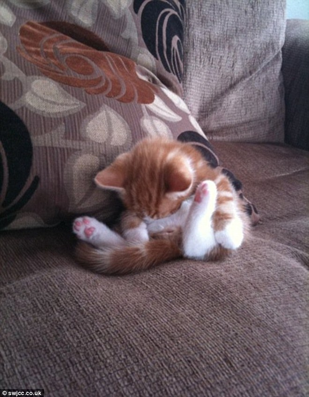 """Những tư thế ngủ """"khó đỡ"""" của các chú mèo ảnh 3"""