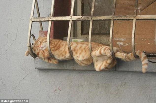"""Những tư thế ngủ """"khó đỡ"""" của các chú mèo ảnh 8"""