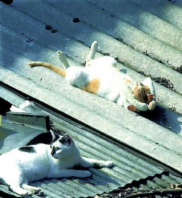 """Những tư thế ngủ """"khó đỡ"""" của các chú mèo ảnh 10"""