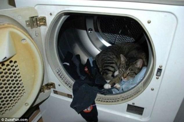 """Những tư thế ngủ """"khó đỡ"""" của các chú mèo ảnh 12"""