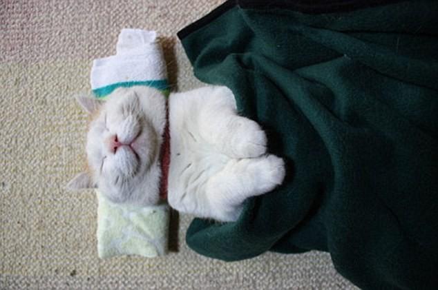 """Những tư thế ngủ """"khó đỡ"""" của các chú mèo ảnh 15"""
