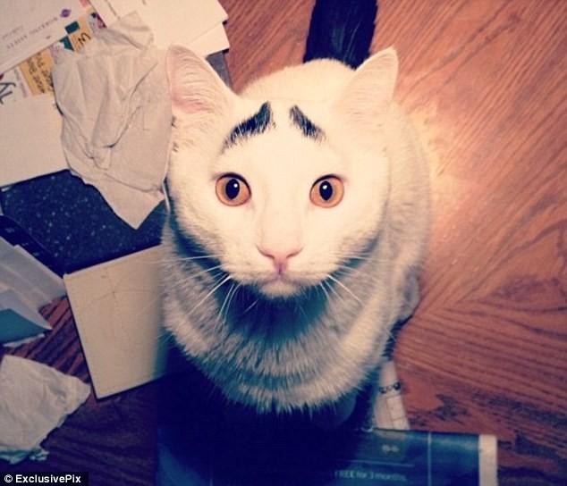 Sốc với chú mèo có lông mày như người ảnh 6