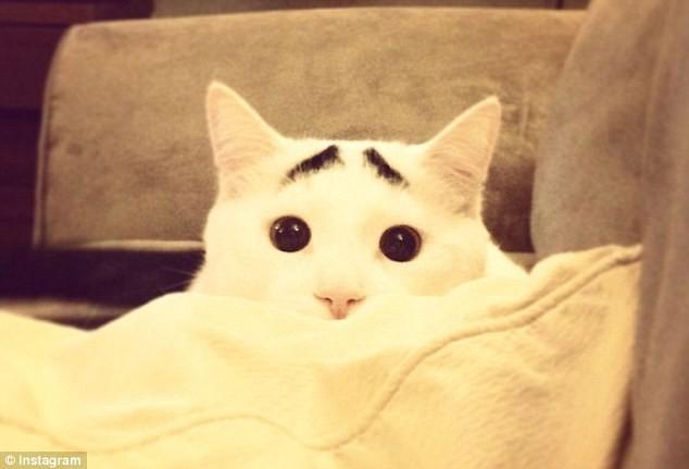 Sốc với chú mèo có lông mày như người ảnh 1