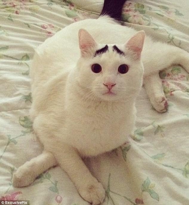 Sốc với chú mèo có lông mày như người ảnh 7