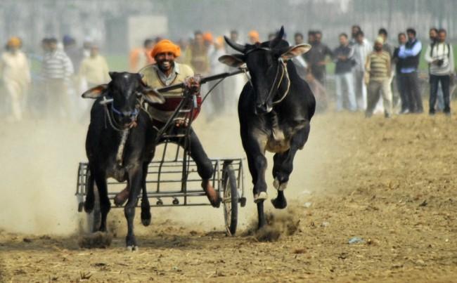 Kỳ dị thế vận hội ở nông thôn Ấn Độ ảnh 2