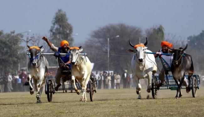 Kỳ dị thế vận hội ở nông thôn Ấn Độ ảnh 5