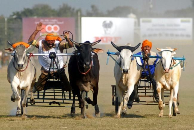 Kỳ dị thế vận hội ở nông thôn Ấn Độ ảnh 7
