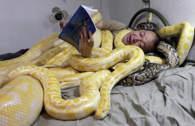 Không ngủ được nếu thiếu... rắn ảnh 1
