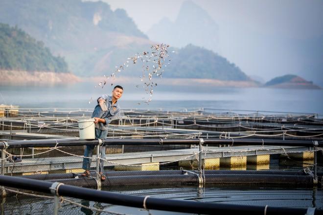 Cận cảnh trang trại độc quyền nhân giống cá tầm triệu USD tại Việt Nam ảnh 2