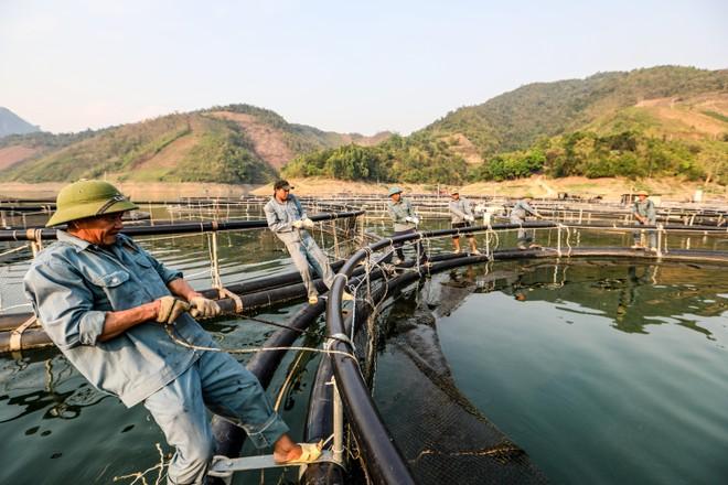 Cận cảnh trang trại độc quyền nhân giống cá tầm triệu USD tại Việt Nam ảnh 5